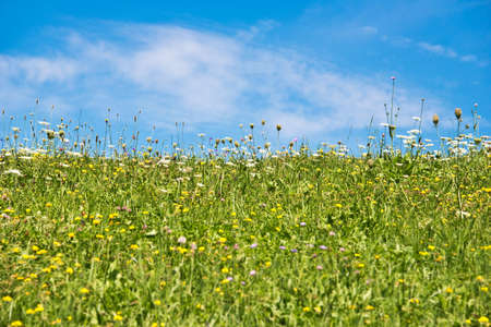 filed: Meadow and blue sky Stock Photo