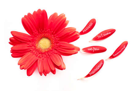 I love you Mum, written in French on a red daisy flower, isolated on white background photo