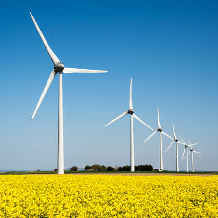 Wind turbine in a yellow flower field of rapeseed