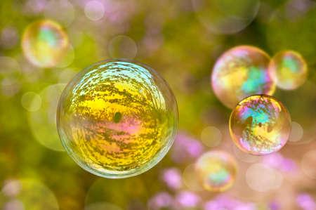 vegetal: Soap bubble, green vegetal blurred  background