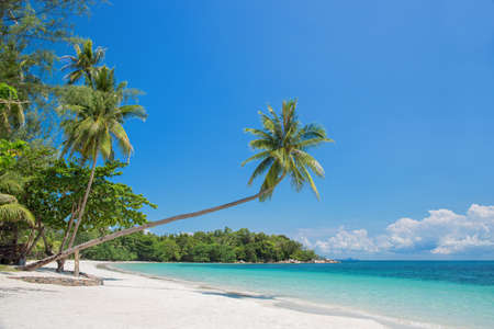 Tropical beach landscape with a leaning palm tree