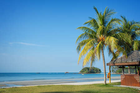 Tropical Beach Landscape With Palm Trees Photo