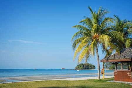 beach landscape: Tropical beach landscape with palm trees