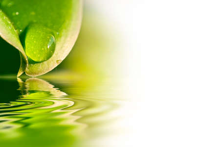 zen water: Raindrop on a leaf, water reflection and white copy space