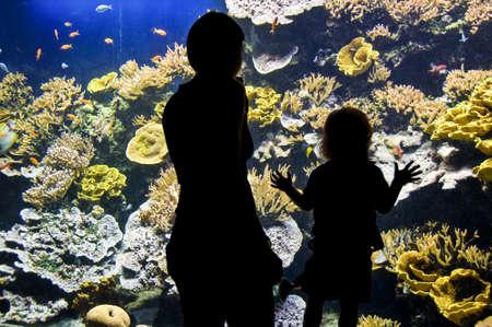 aquarium visit: Silhouettes of visitors in an aquarium