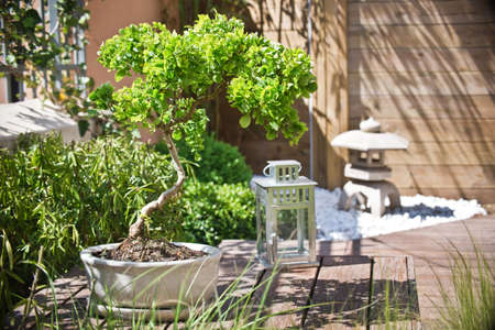 Bonsai in a zen garden Standard-Bild