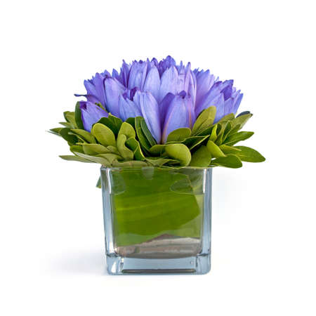 Blue water lilies in a vase,  isolated on white background Stock Photo