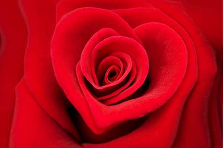 parejas de amor: Rosa roja en la forma de un coraz�n