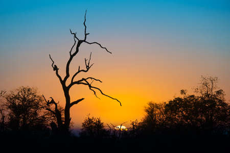 kruger national park: Sunset in Kruger park, South Africa