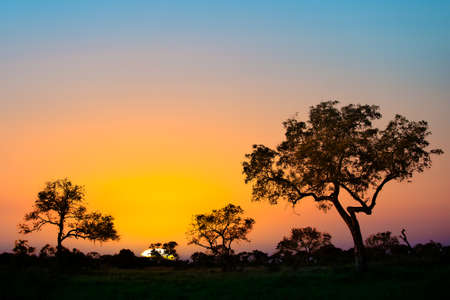 africa tree: African sunset