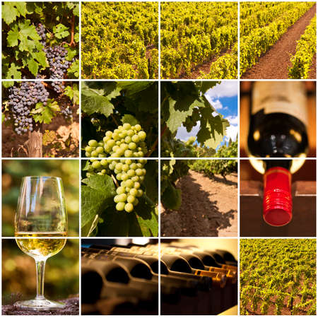 Oenology and wine collage