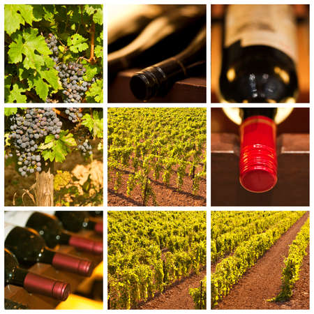 vinery: Oenology and wine collage