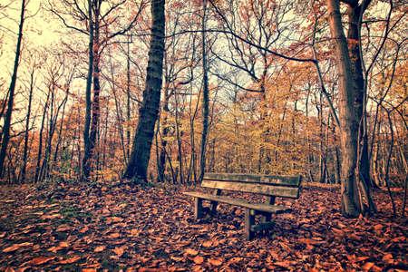 ina banco bosque en otoño, estilo de la vendimia Foto de archivo