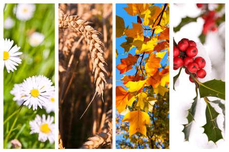 Quatre saisons collage concept Banque d'images - 44868270