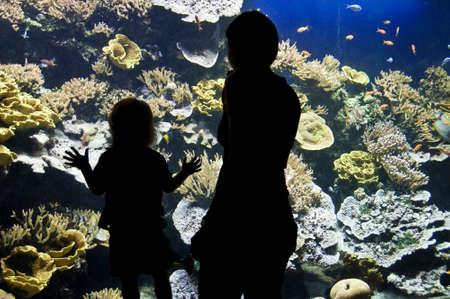 visitors: Silhouettes of visitors in an aquarium