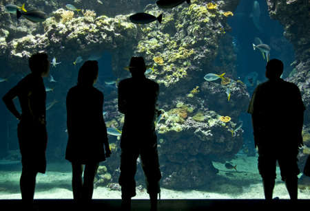 aquarium visit: Silhouettes of visitors in an aquarium