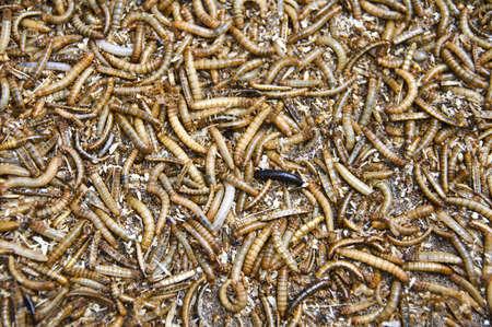 gusanos: Worms fondo Foto de archivo