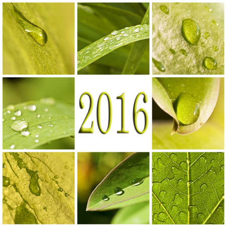 new medicine: 2016, green leaves and raindrops photo collage Stock Photo