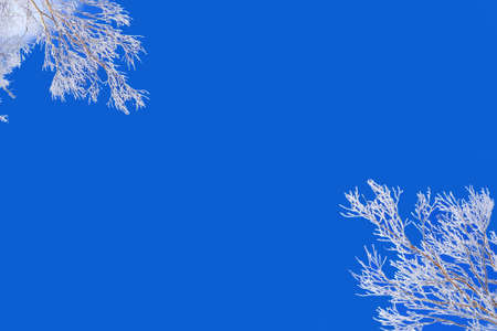 frozen winter: Winter background, blue sky and snowy frozen tree branches