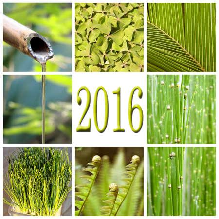 green vegetation: 2016, green vegetation collage Stock Photo