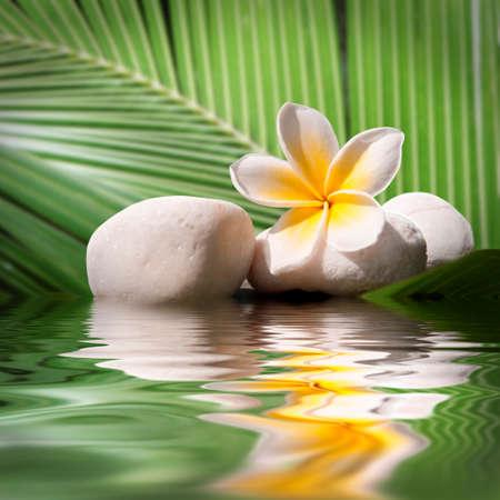 Plumeria en witte stenen, water reflecties
