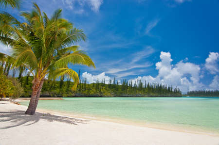 Palm tree on a tropical beach, Isle of Pines, New Caledonia 免版税图像