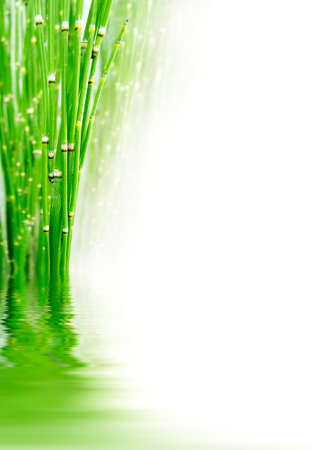 reflection: Green bamboos with white copyspace, water reflections