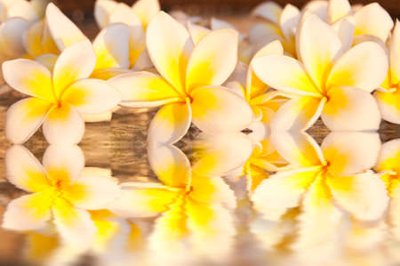 bunch of flowers: Frangipani flowers (plumeria) background