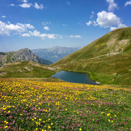 lac: Neal lake with flowers in the foreground, Queyras, the Alps, France Stock Photo