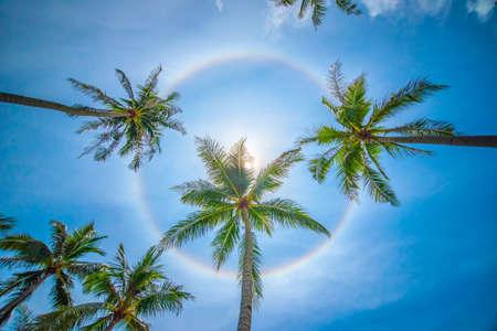 natural phenomena: Sun rainbow circular halo phenomenon with palm trees