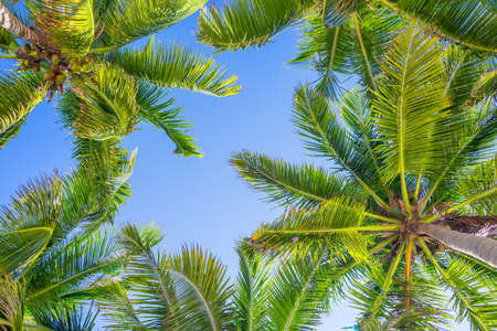 below: Blue sky and palm trees view from below
