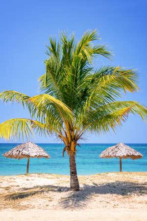 sunshade: Straw umbrella and palm tree on a beautiful tropical beach