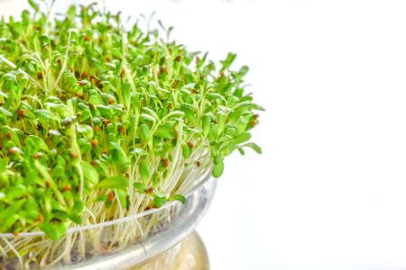germinación: brotes frescos de alfalfa sobre fondo blanco