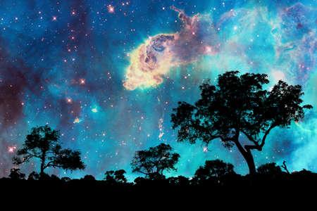 magia: Paisaje nocturno con silueta de árboles y noche estrellada