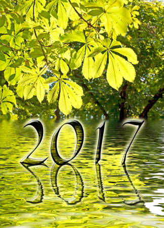 greetings card: 2017, Green leaves and water reflections greeting card