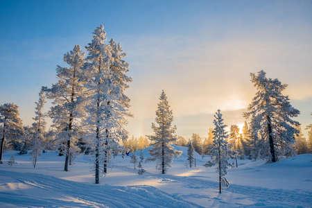 Winterlandschaft, eisige Bäume im schneebedeckten Wald bei Sonnenaufgang in Lappland, Finnland