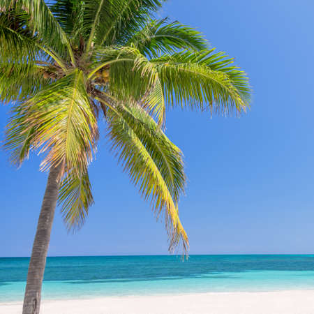 caribbean beach: Beach with palm trees, caribbean sea