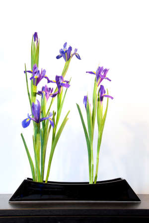 arrangements: Spring ikebana with blue irises, japanese flower arrangement