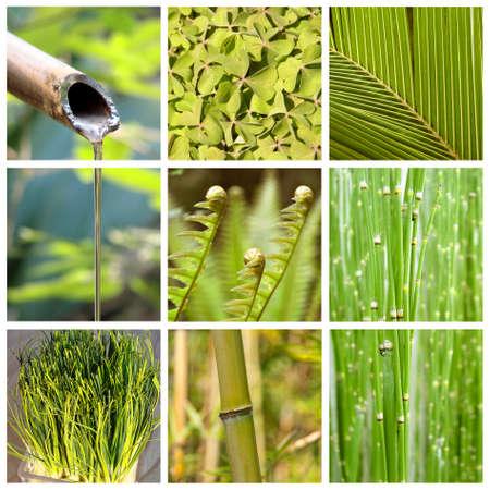 Green nature square collage Stock Photo