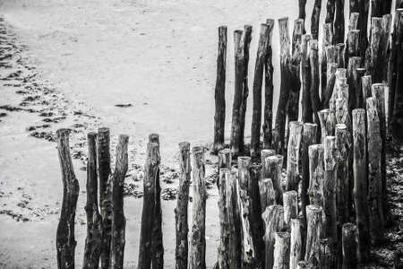 breakwaters: Wood piles at low tide on the beach of Saint Malo, France