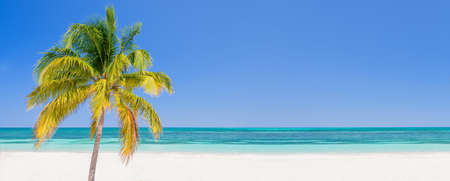 Palm tree on a beach in Cayo Levisa Cuba, panoramic background with copy space, travel concept