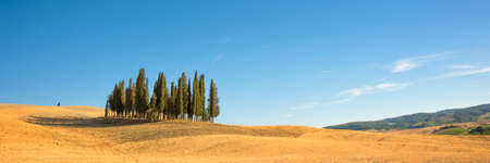 Beautiful typical tuscan panorama with cypress trees in a field in summer, Val dOrcia, Tuscany, Italy Stock Photo