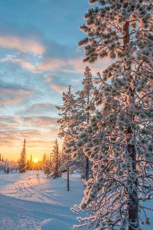 Śnieżny krajobraz o zachodzie słońca, zamarznięte drzewa zimą w Saariselka, Laponia, Finlandia