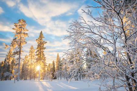 Snowy landscape at sunset, frozen trees in winter in Saariselka, Lapland, Finland Stockfoto