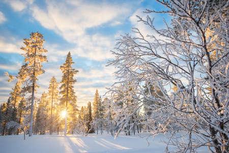 Verschneite Landschaft bei Sonnenuntergang, gefrorene Bäume im Winter in Saariselka, Lappland, Finnland Standard-Bild