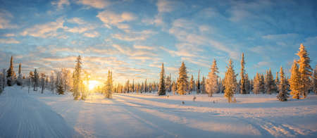 Snowy landscape at sunset, frozen trees in winter in Saariselka, Lapland, Finland Standard-Bild
