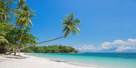 Tropical beach panorama with a leaning palm tree, Bintan island near Singapore, Indonesia