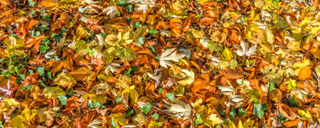 Background of fallen colorful autumnal leaves on the ground