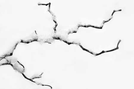 Twisted tree branch under the snow. Black and white photography.