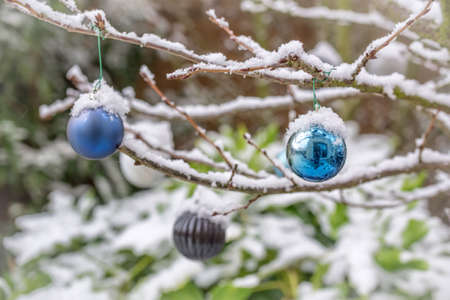 Christmas baubles covered with snow, hanging from a branch of a tree in a garden